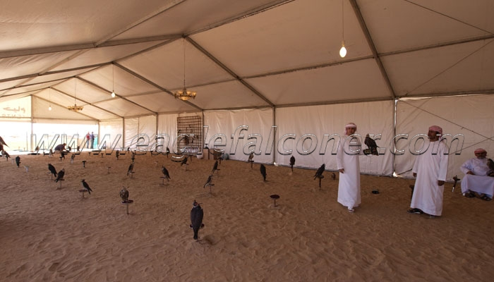 Falcon tent at the desert camp Falconry Festival