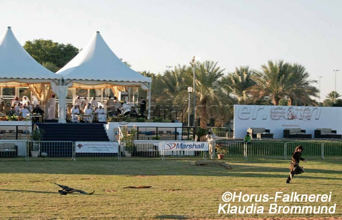 Third Festival of Falconry Al Ain